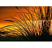 Grass in the Sunset Photographic Print
