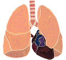 heart and lungs Photographic Print