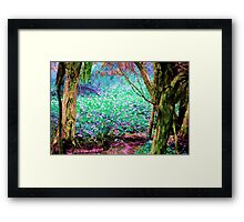 Mystic Swamp Framed Print