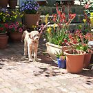 Buddy Exploring The Garden by joycee