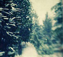 Magic of Snow II by marziafrank