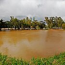 Murrumbidgee Floods, Panorama by bazcelt