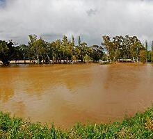 Murrumbidgee Floods, Panorama by bazcelt
