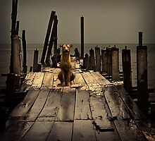 Portrait of a Sea Dog #0101 by Michiel de Lange