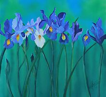 a clutch of dutch irises by Almeta