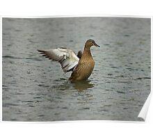 Waterfowl in Flight #7 Poster
