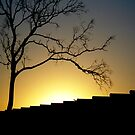 Tree & Shed @ Sunset by jayded