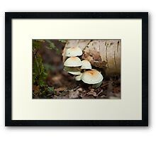 Tree Fungi Framed Print