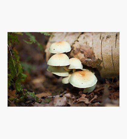 Tree Fungi Photographic Print