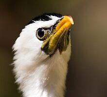 Phalacrocorax melanoleucos - Little pied comorant  by PurelyPrime