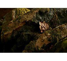 Soft Moss Photographic Print