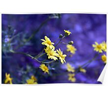 Daisies in Blue.. Poster