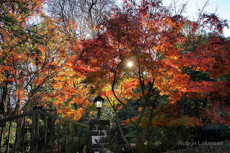 Autumn sun by Robyn Lakeman