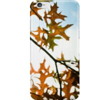 autumn leaves, backlit iPhone Case/Skin