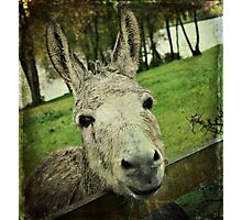 Carrots? Pleeese!!! Photographic Print