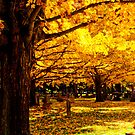 Fall Walk by Jay White