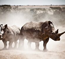 White Rhinos by robinmoore