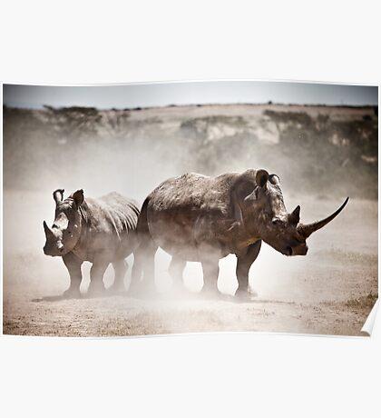 White Rhinos Poster