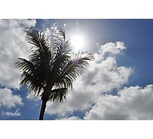 Palm in the Sun Photographic Print