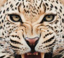 Leopards Sticker