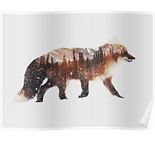 Arctic Red Fox Poster