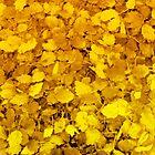 Golden carpet by michele1x2
