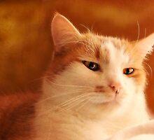 Felis domesticus by Yool
