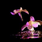 Daffodils on water by TheFotoGraffer
