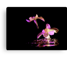 Daffodils on water Canvas Print