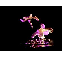 Daffodils on water Photographic Print