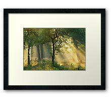 Enjoying the morning sunshine Framed Print