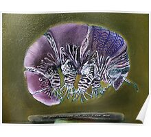 Symbiosis: Tardigrade Poster