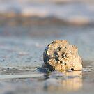 Whelk Shell in Surf along Atlantic Beach by NCBobD
