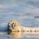 Whelk Shell in Surf by NCBobD