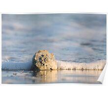 Whelk Shell in Surf Poster