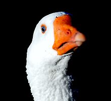 I am ready for my closeup Mr. Demille by TomSpencer