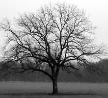 Lone Oak by DreamBigInk1