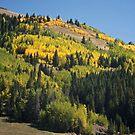 Golden Aspens in the mountains by Ann Reece