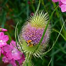 Teasel and Bee by Jane-in-Colour