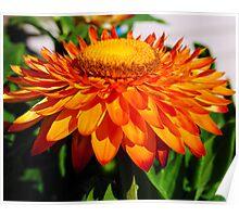 Straw Flower Bliss Poster