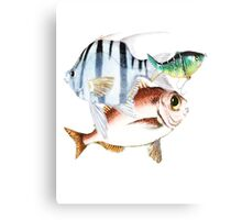 Funny Fish Canvas Print