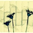 Flowers in front of a brick wall by susan stone