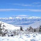 High Sierra Winter View by marilyn diaz
