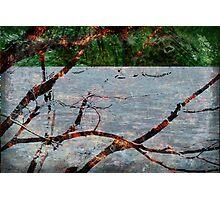 Portage Photographic Print
