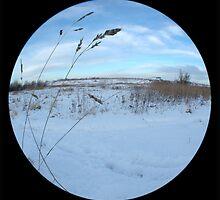 Snowglobe by rosiephoto
