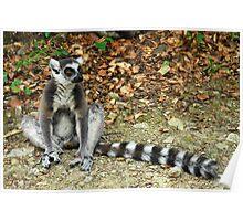 The Watcher - Lemur Poster