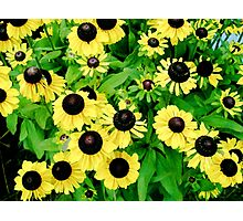 Yellow and Black Flowers  Photographic Print
