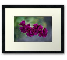 Velvet Flower Framed Print