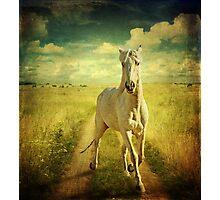 Ouro Photographic Print