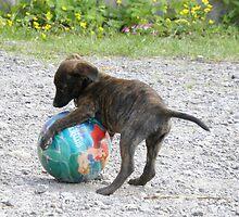Baby Roxi and Ball !  by rhian mountjoy